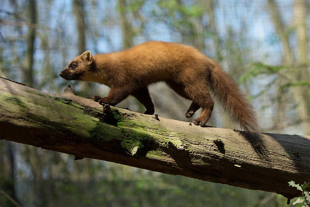 Animal on Tree Limb