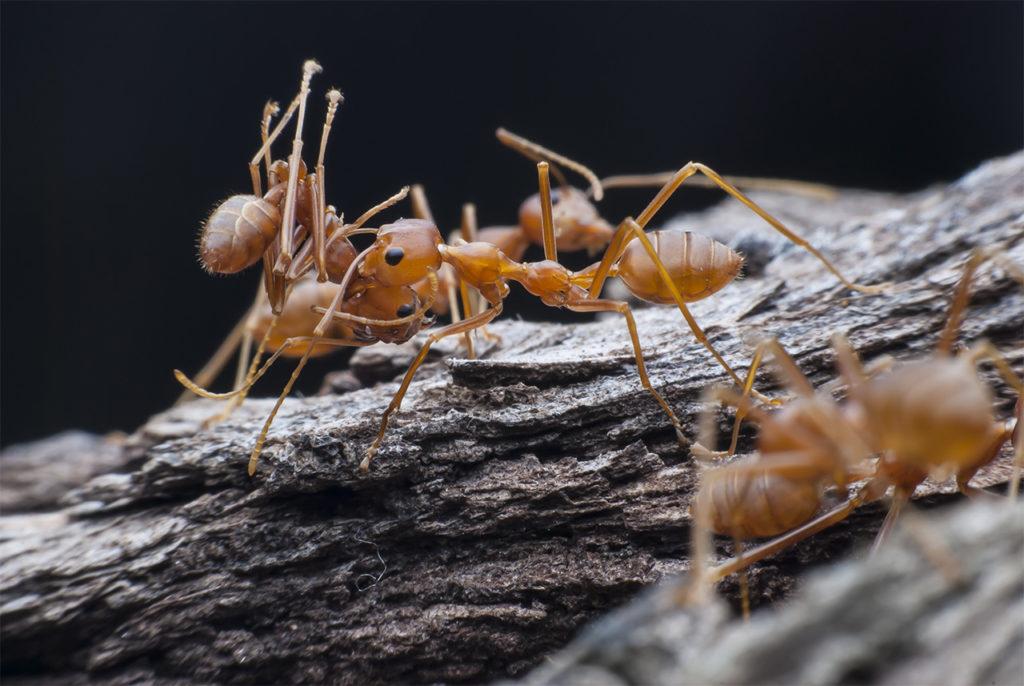 ants on a dead tree