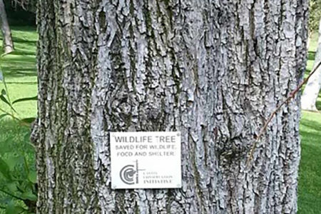 The CCI is designated as a Conservation Milestone