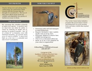 cci-brochure-original-jpeg