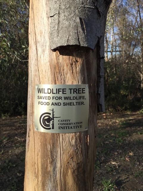 Park Ranger Retains Dead Trees For Urban Birds The