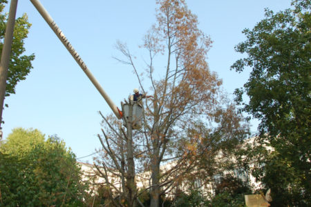 The Smithsonian Gardens stands up for dead trees!
